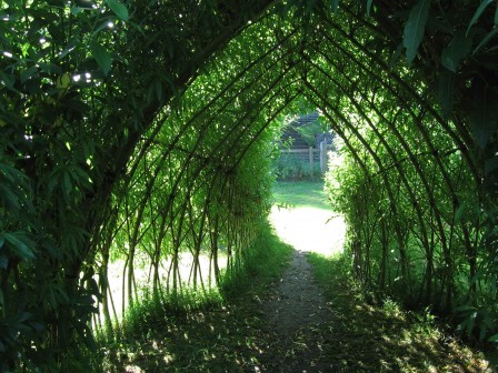 Living Willow Structures Coppice Products